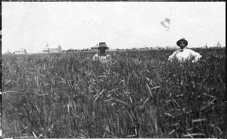 Early American rye farmers in western Pennsylvania